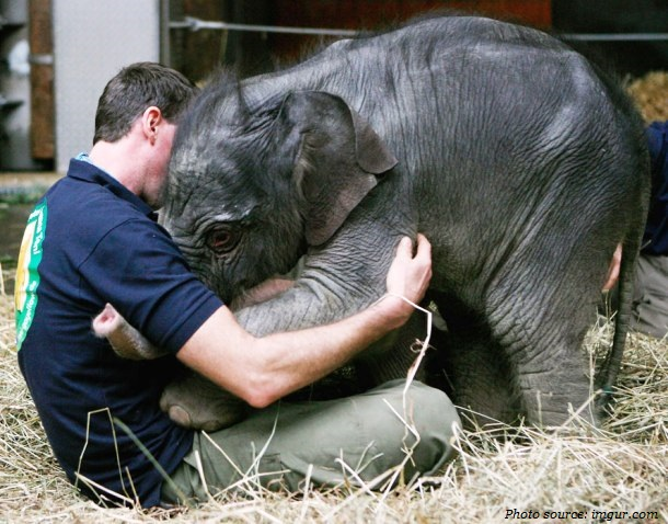 elephant-hug
