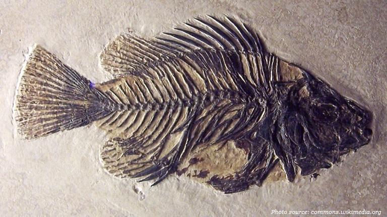 fish fosil