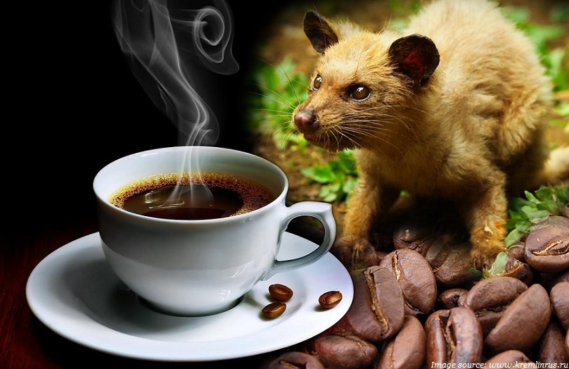 kopi luwak worlds most expensive coffee