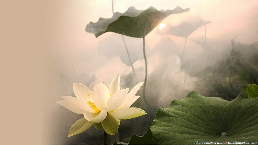 Interesting facts about lotus flower just fun facts lotus flower mightylinksfo