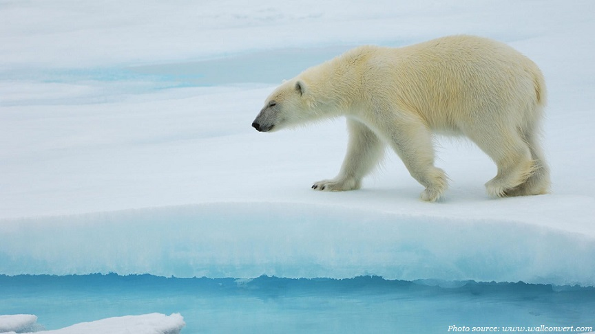 Interesting facts about polar bears | Just Fun Facts