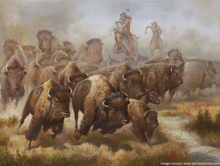bison and indians