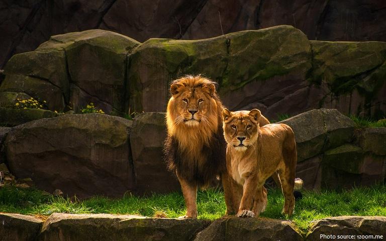 lions couple