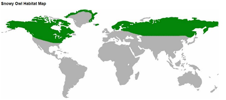 snowy owel habitat map
