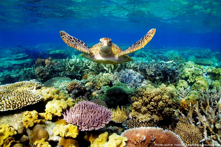 the great barrier reef sea turtle