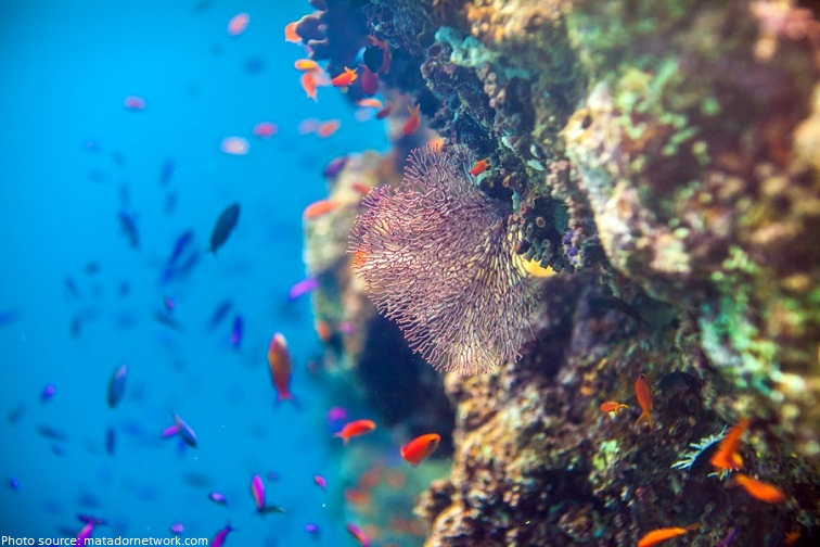 the great barrier reef seven natural wonders of the world
