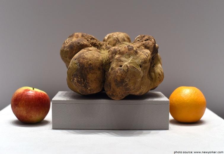 worlds largest truffle