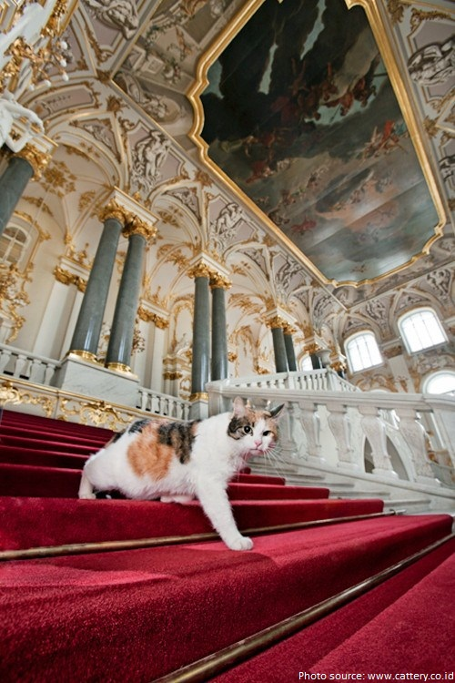 hermitage cats russia st petersburg