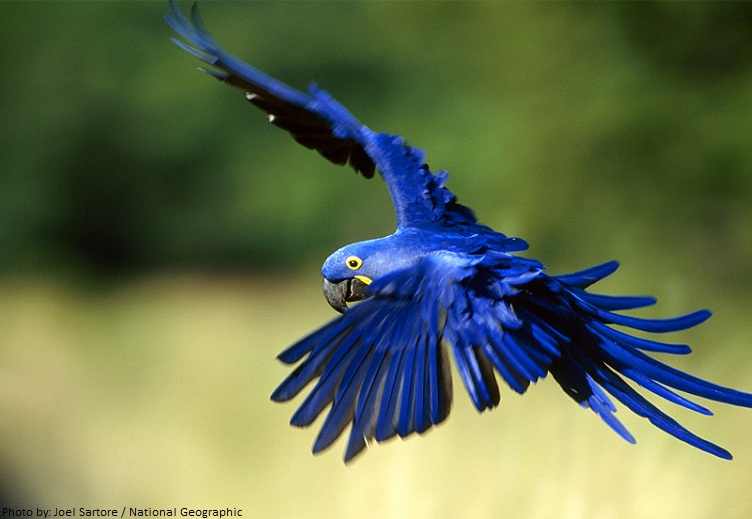 Interesting facts about macaws | Just Fun Facts