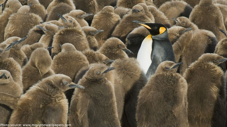 king penguin among chicks south georgia island
