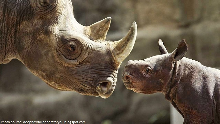 rhino mother and babu