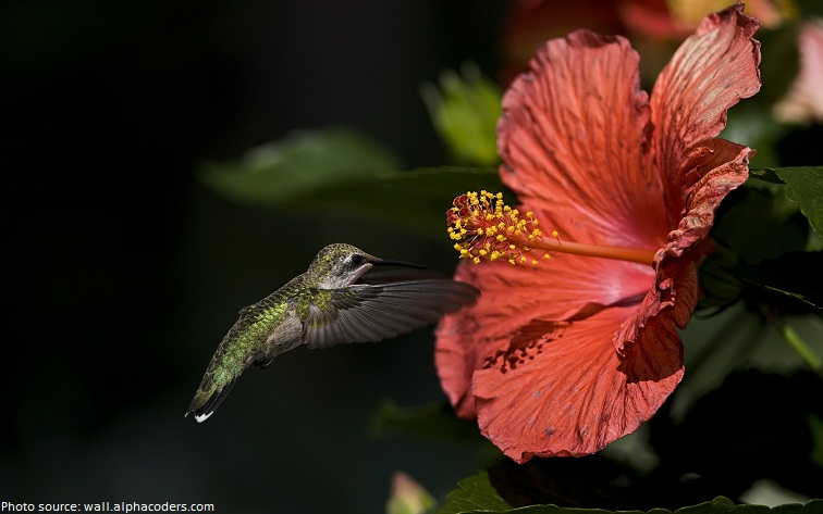 hummingbird and flowers