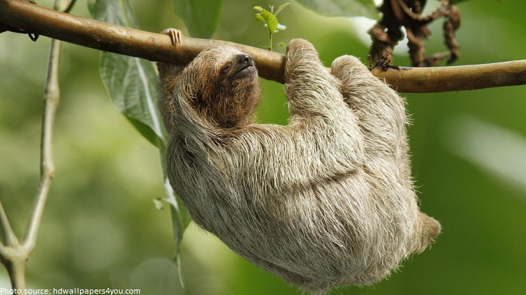 interesting facts about sloths just fun facts