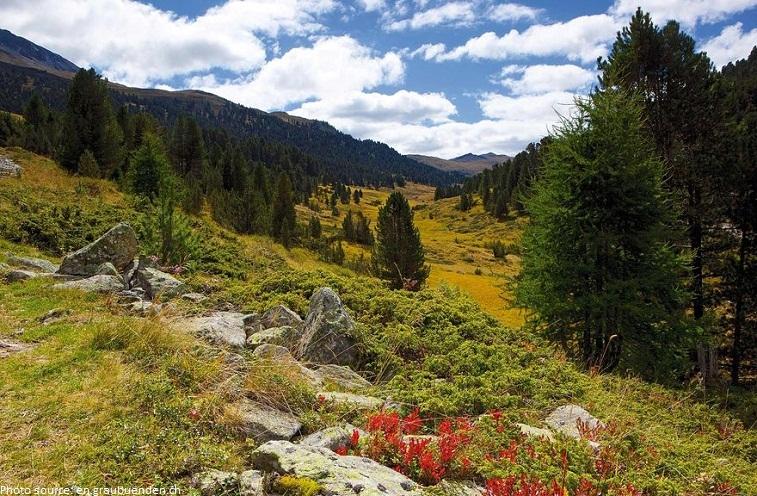 Swiss National Park summer