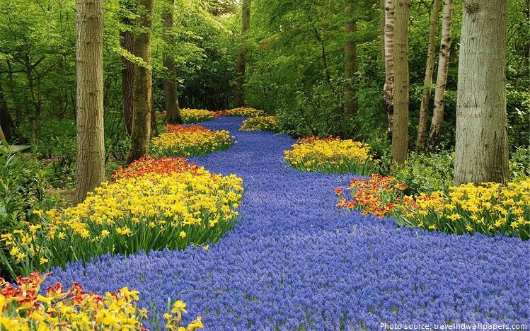 keukenhof garden flowers lilies