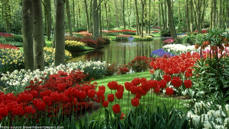 keukenhof garden flowers