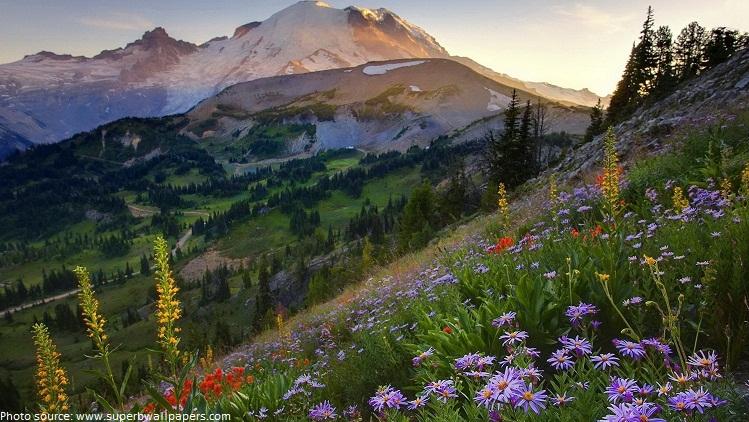 mount rainier national park flowers