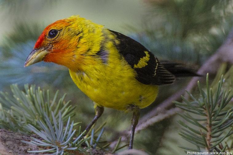 rocky mountain national park bird