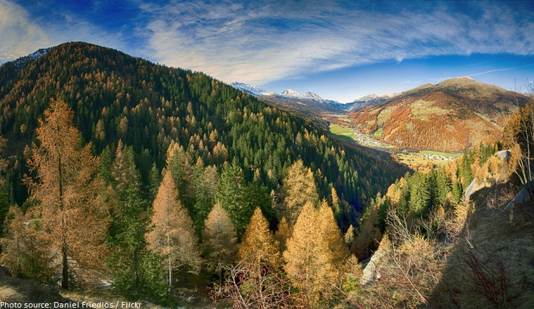 swiss national park trees