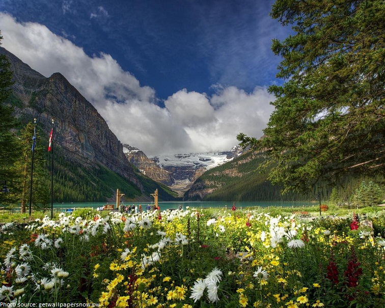 banff national park flowers