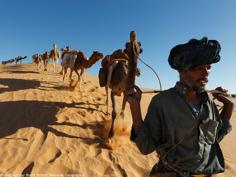 camels and nomad