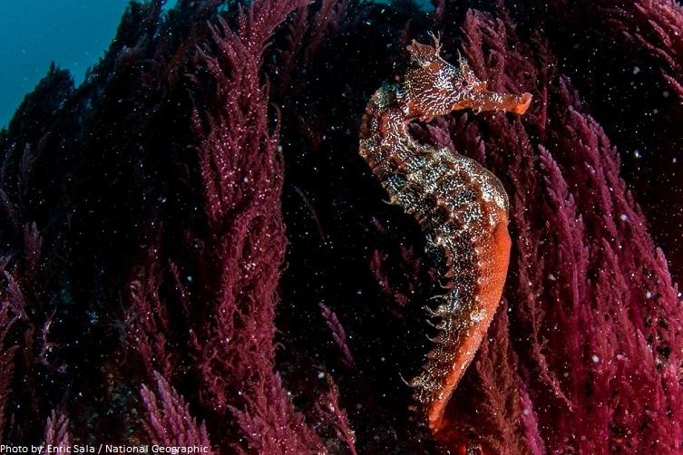 seahorse-4