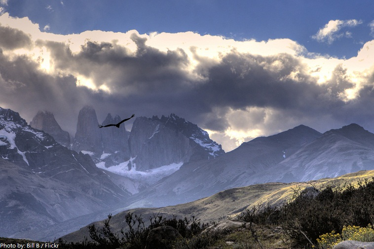 torres del paine national park andean condor