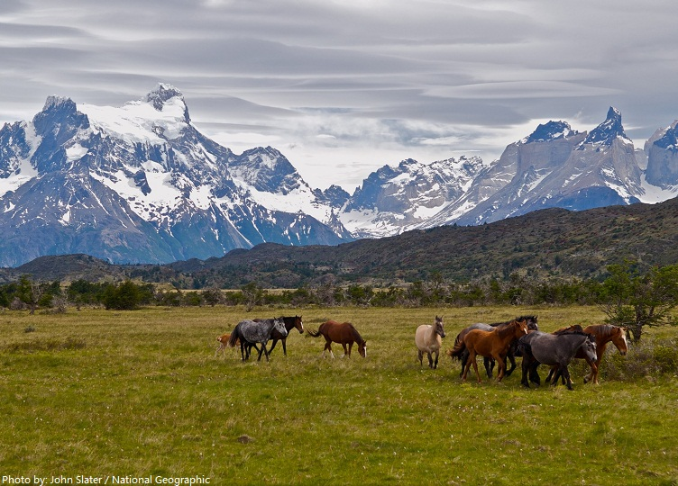 torres del paine national park wild horses