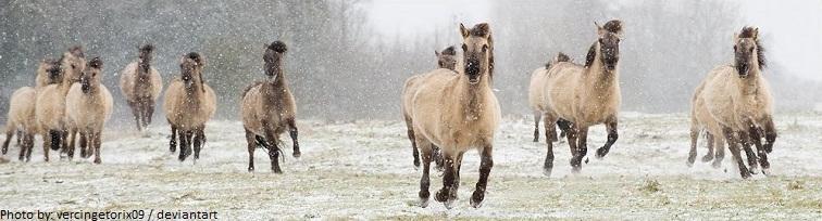 wild horses poland