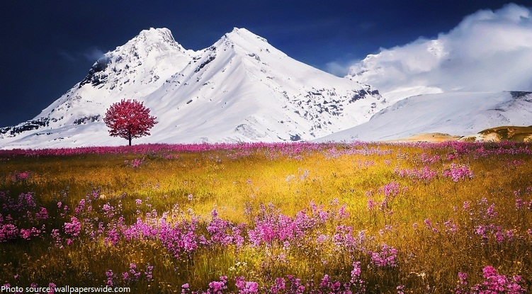 alps flowers