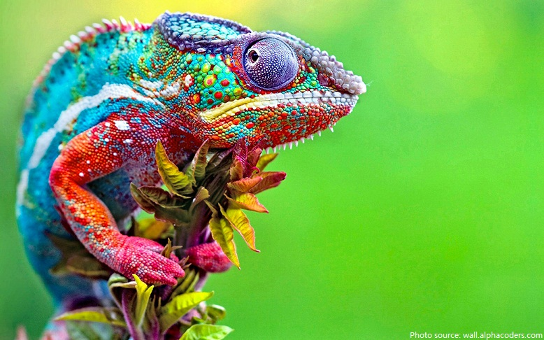 Interesting facts about chameleons | Just Fun Facts
