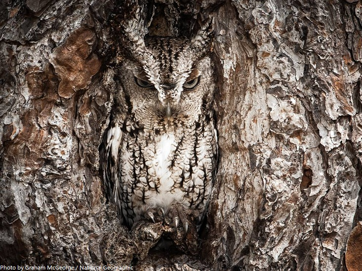 owl camouflage