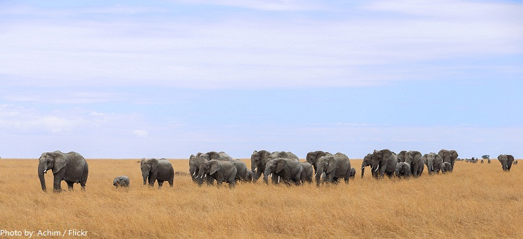 serengeti national park elephants