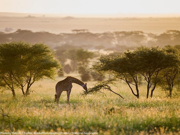 national parks ecosystems closed rainy season