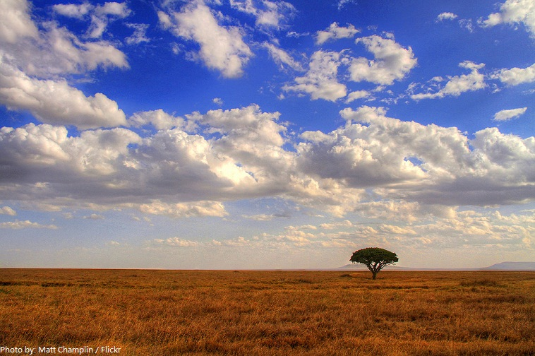 serengeti plain