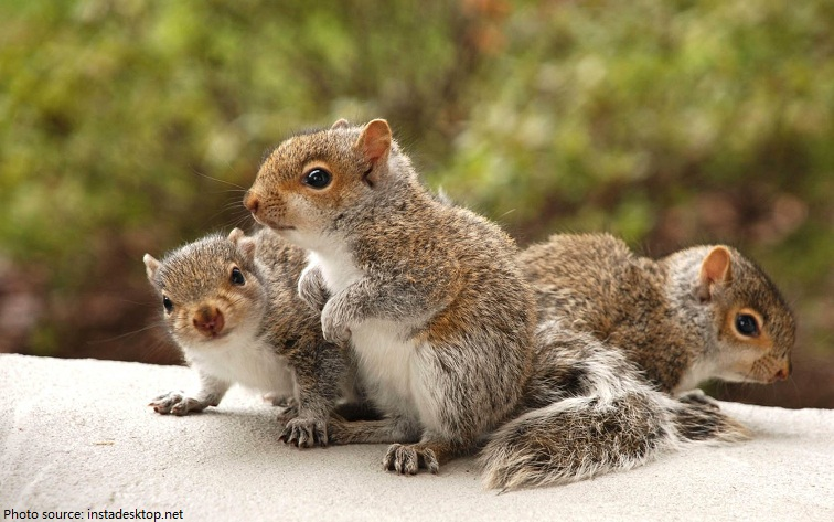 baby squirrels