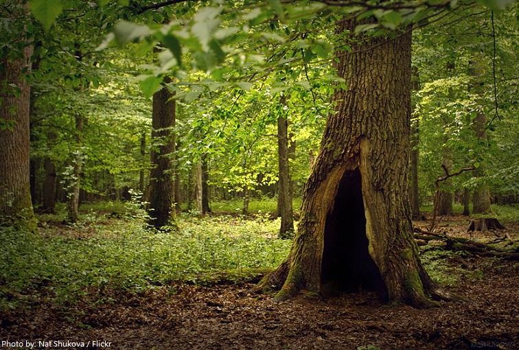 belarus forest