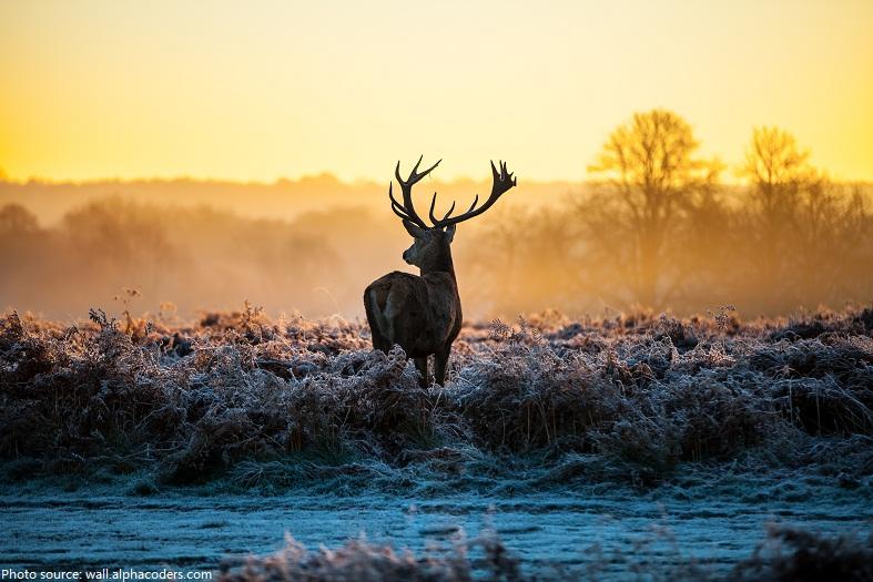 deer-3