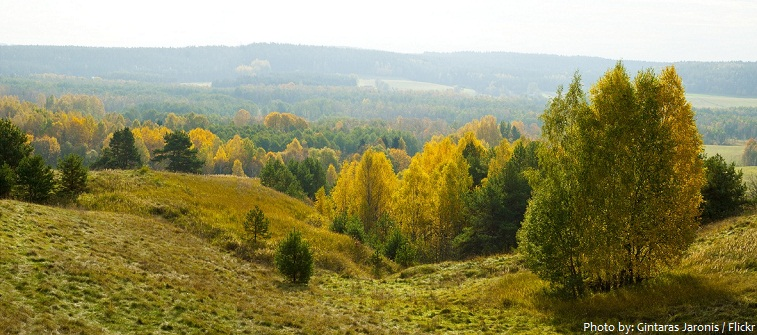 lithuania forest