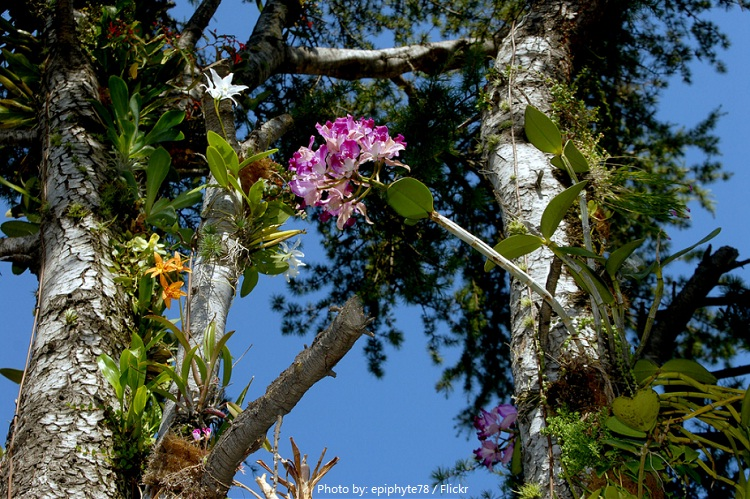 orchids and tree