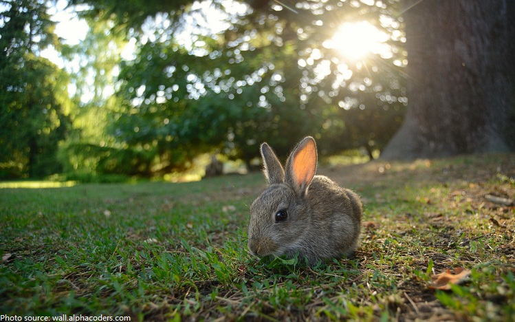 Image result for rabbits in woods