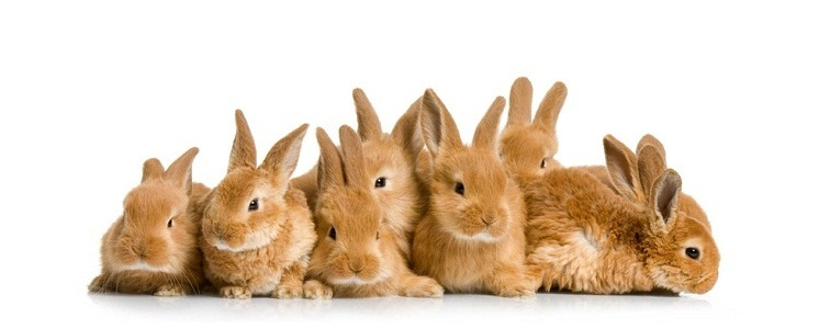 rabbit-babies