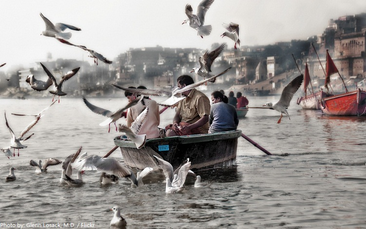 river ganges birds