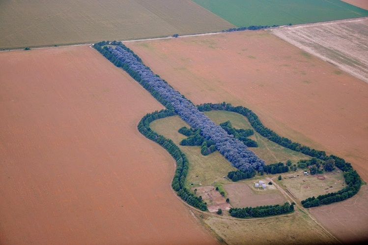 guitar shaped forest
