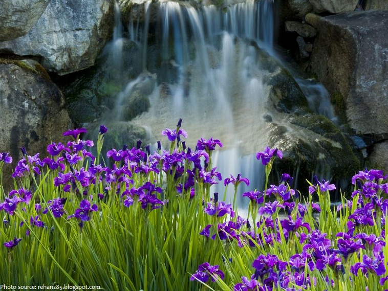 interesting facts about irises  just fun facts, Beautiful flower