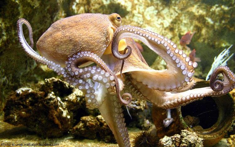 octopus-4