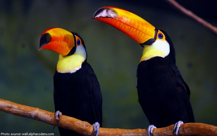 Interesting facts about toucans | Just Fun Facts