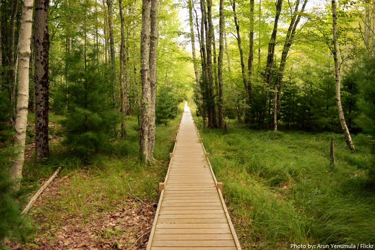 acadia national park hiking trail