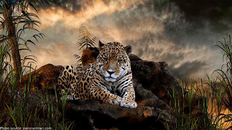 Superb Interesting Facts About Jaguars
