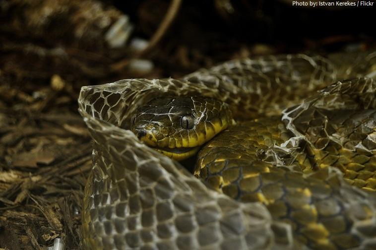 snake old skin